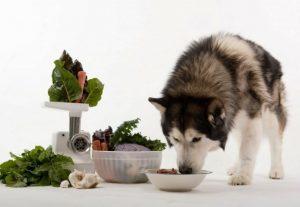 thức ăn cho chó alaska